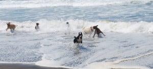 plage-chiens-barcelone