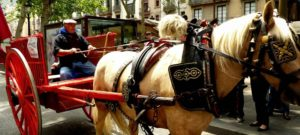 cheval-mort-epuisement-barcelone