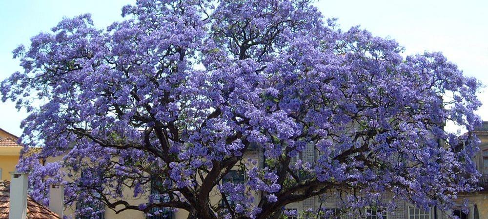 arbre-ecologique-catalogne-barcelone