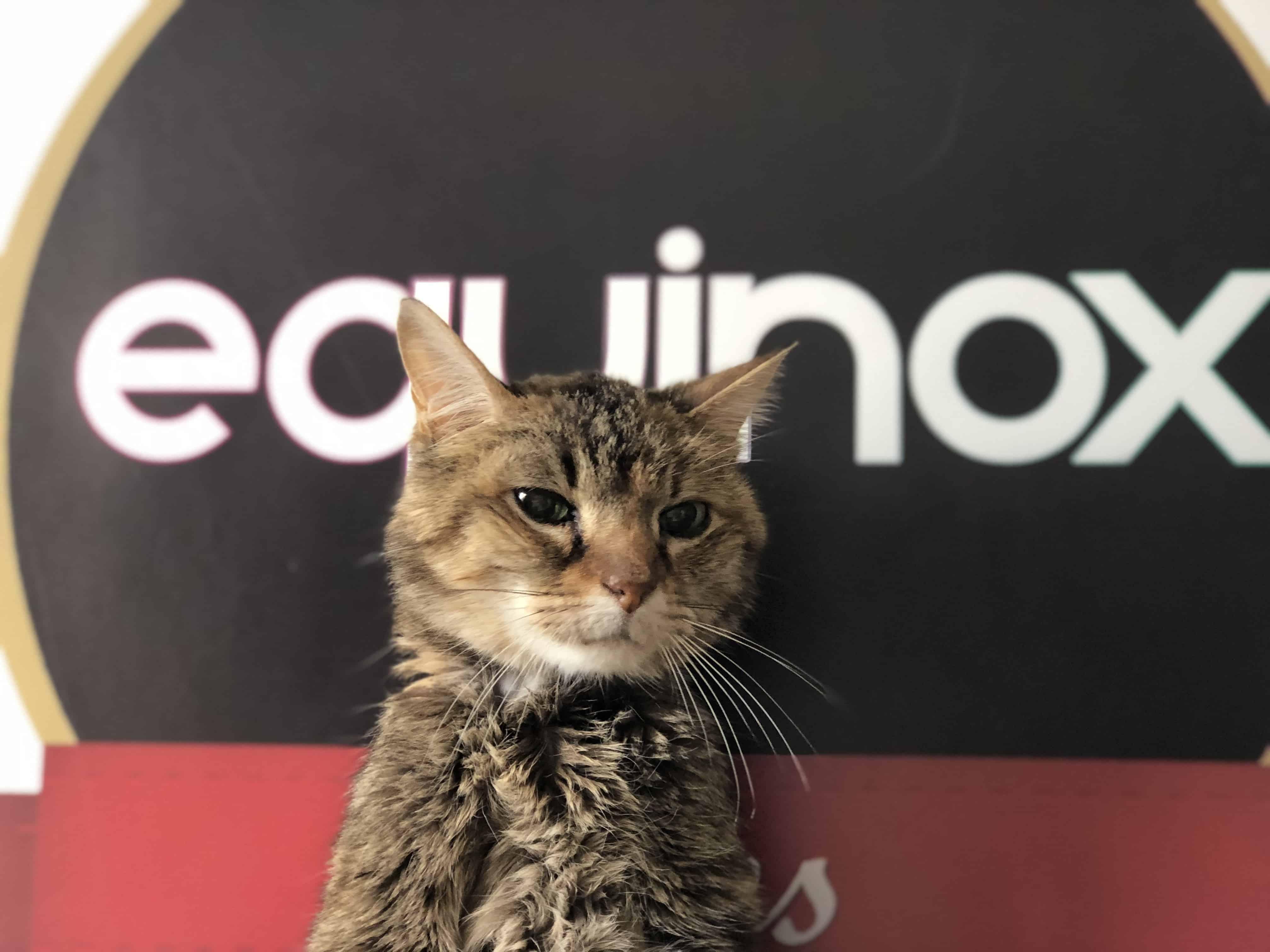 chat-equinox