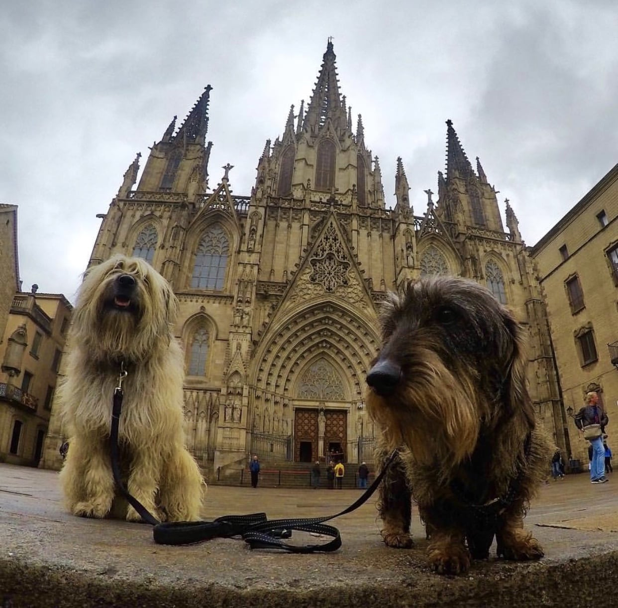 perros-cathedrale