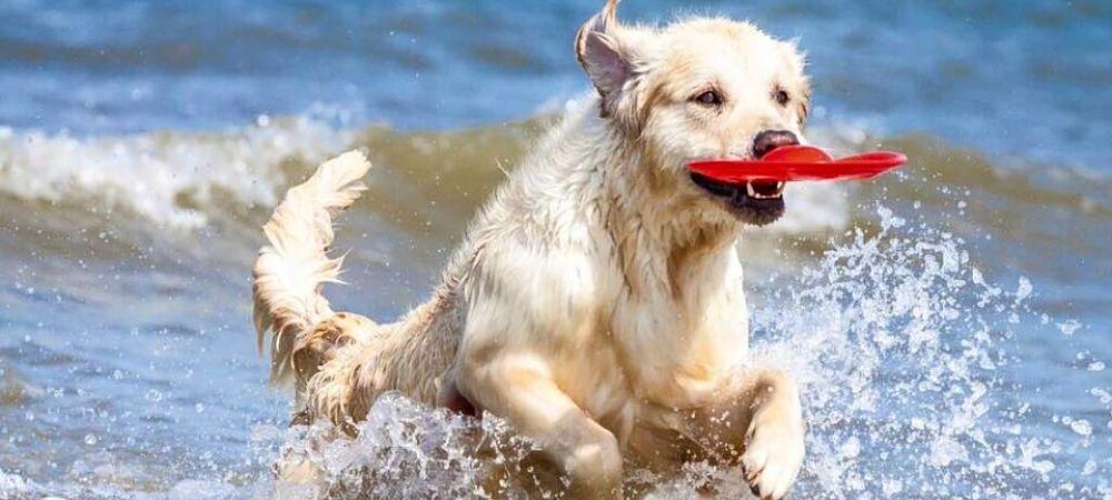 plage pour chien Barcelone