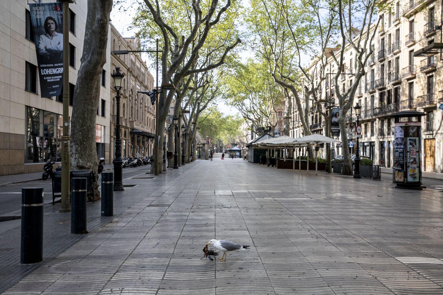 Mouette goéland Barcelone